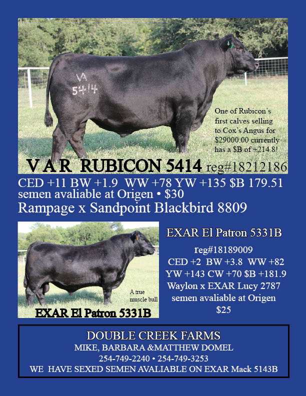 Sires For Sale from Double Creek Farms