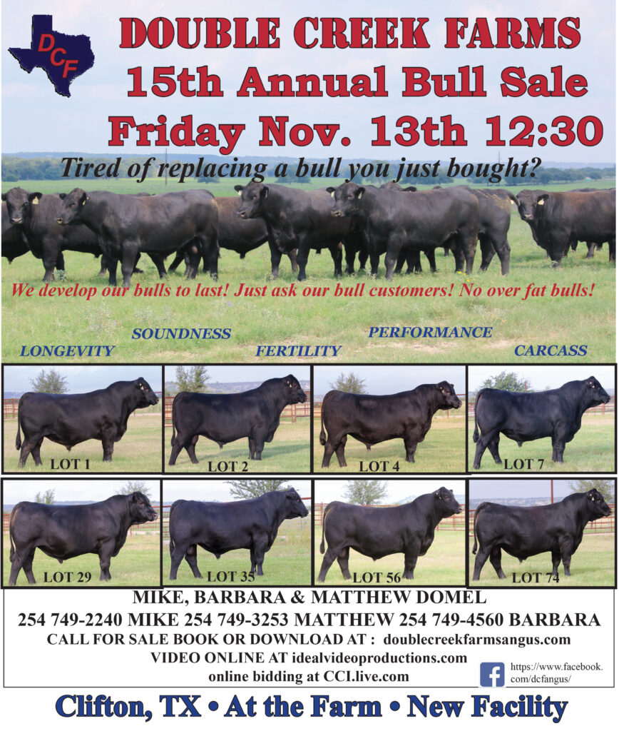 Registered Angus Cattle For Sale in Meridian, TX